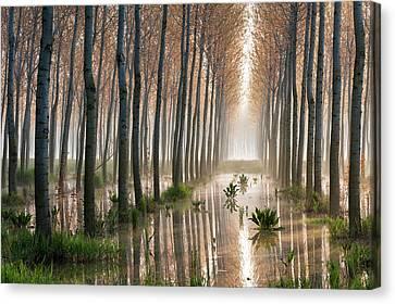 Rains Of Spring Canvas Print
