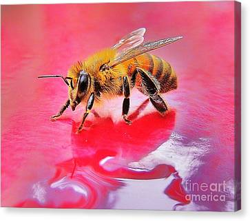 Rainy Day Bee Canvas Print by John King