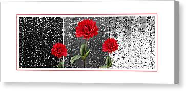 Rainy Day Dahlias Canvas Print by Natalie Kinnear