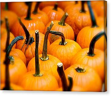 Canvas Print featuring the photograph Rainy Day Pumpkins by Ira Shander