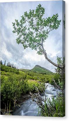 Canvas Print featuring the photograph Rainy Evening On A Mountain Stream by Tim Newton