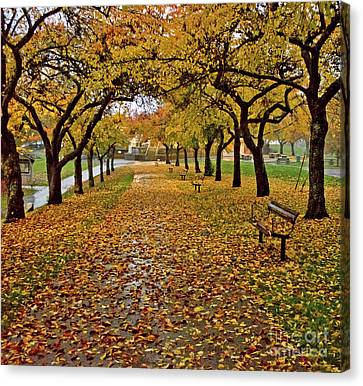 Canvas Print featuring the photograph Rainy Path by Maria Janicki