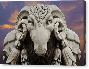 Ram-a-sees Canvas Print by David Davies