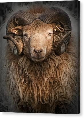 Ram Portrait Canvas Print by Randall Nyhof