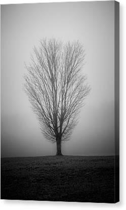 Ramblin' Tree Canvas Print
