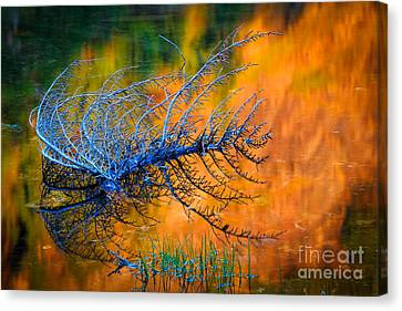 Rampart Lakes Skeleton Canvas Print by Inge Johnsson