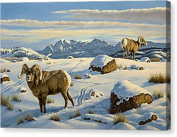 Rams Down From Junction Butte Canvas Print by Paul Krapf