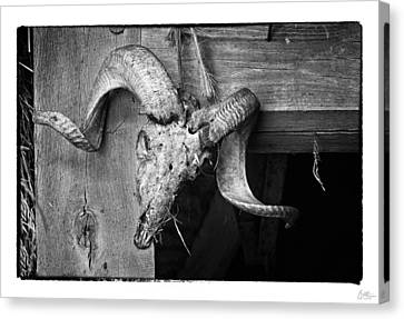 Ram's Head - Art Unexpected Canvas Print by Tom Mc Nemar