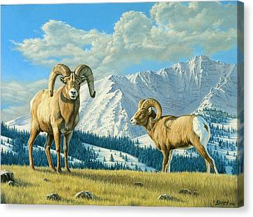 Rams On The Ridge  Canvas Print by Paul Krapf