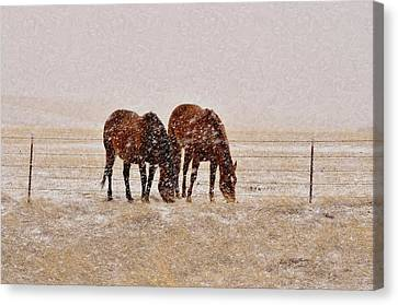 Ranch Horses In Snow Canvas Print
