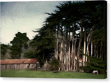 Ranch With Cypress Canvas Print