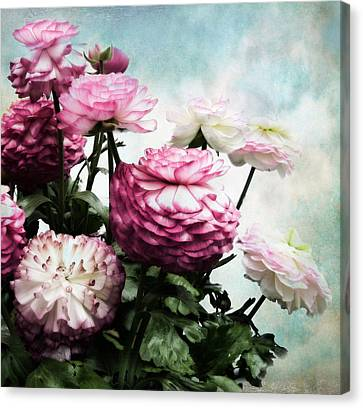 Ranunculus In Bloom Canvas Print by Jessica Jenney