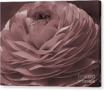 Canvas Print featuring the photograph Ranunculus Red by Jean OKeeffe Macro Abundance Art
