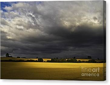 Rapefield Under Dark Sky Canvas Print by Heiko Koehrer-Wagner