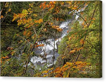 Rapids Through The Autumn Canvas Print by Darleen Stry