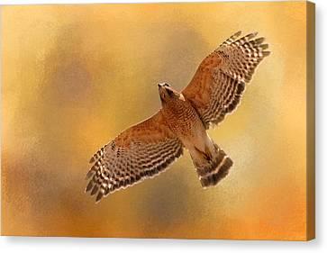 Raptor's Afternoon Flight Canvas Print