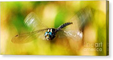 Rare Dragonfly With A Face Art Prints Canvas Print