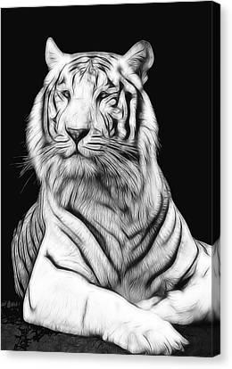 White Tiger Canvas Print by Daniel Hagerman