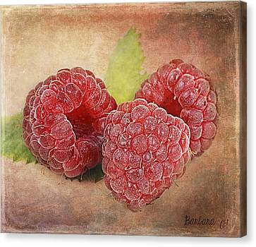 Raspberries  Canvas Print by Barbara Orenya