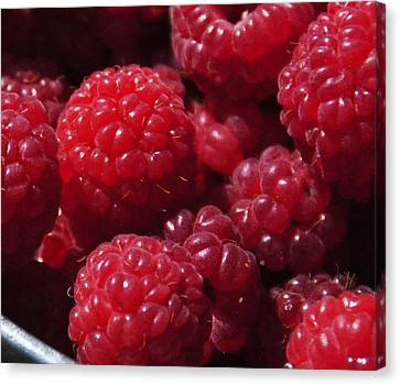 Raspberry Crave Canvas Print by Elena Hasnas
