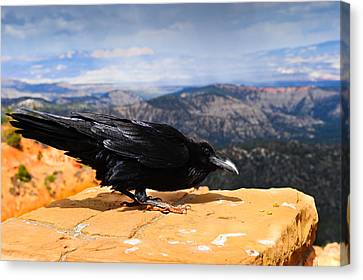 Raven Bryce Canyon Canvas Print