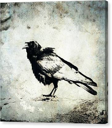 Raven On Blue Canvas Print by Carol Leigh