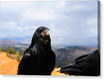 Raven Portrait Canvas Print