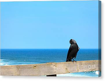 Canvas Print featuring the photograph Raven Watching by Peta Thames