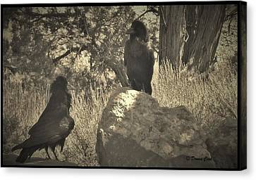 Raven's Squawk Canvas Print by Donna Cook