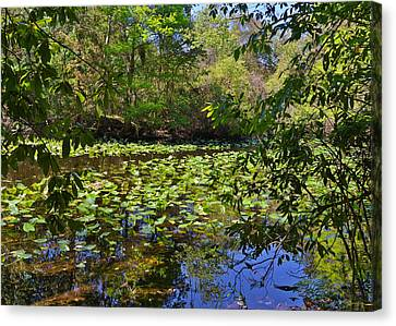 Nature Scene Canvas Print - Ravine Gardens - A Different Look At Florida by Christine Till