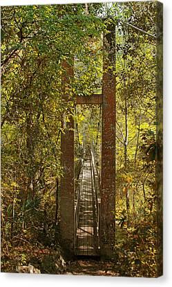 Nature Scene Canvas Print - Ravine Gardens State Park In Palatka Fl by Christine Till