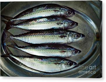 Raw Fish Canvas Print by Mythja  Photography