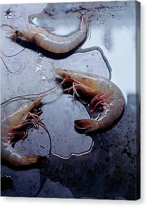 Raw Shrimp Canvas Print by Romulo Yanes
