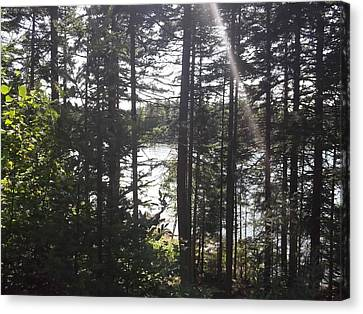 Ray O Light Canvas Print by Melissa McCrann