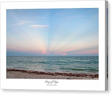 Rays Of Hope Canvas Print by Michelle Wiarda