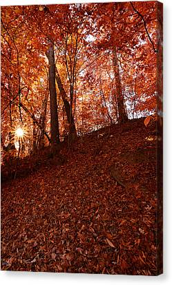Rays Of Leaves Canvas Print