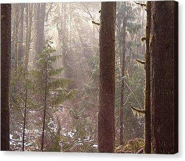 Rays Of Light In Forest Canvas Print by Myrna Walsh