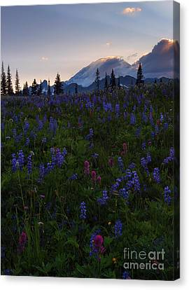 Anenome Canvas Print - Rays Over Rainier by Mike  Dawson
