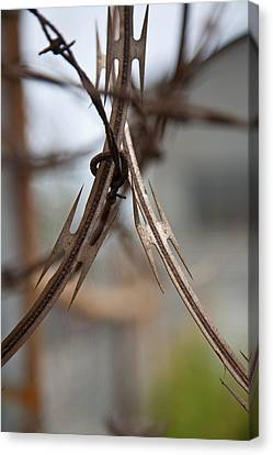Razor Wire Canvas Print by Peter Tellone