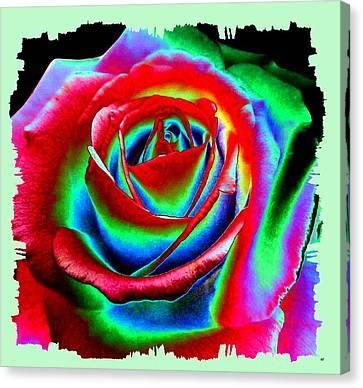 Razzle Dazzle Rose Canvas Print by Will Borden