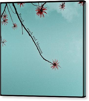 Canvas Print featuring the photograph Reach And Blossom by Kevin Bergen