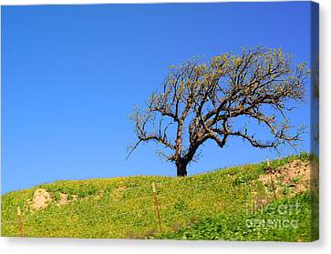 Canvas Print featuring the photograph Reach by Clayton Bruster