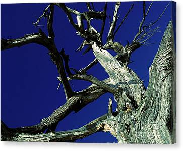 Canvas Print featuring the photograph Reach For The Sky by Janice Westerberg