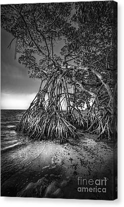 Reaching For Earth And Sky-bw Canvas Print by Marvin Spates