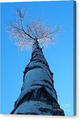 Reaching For The Light Canvas Print by Brian Boyle