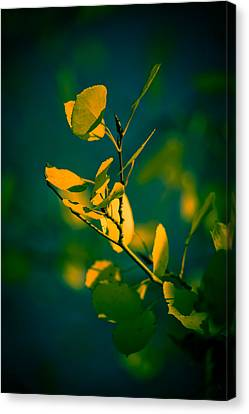 Canvas Print featuring the photograph Reaching For The Light by Dave Garner