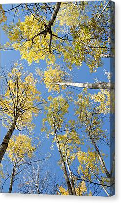 Reaching For The Sky 1 Canvas Print by Rob Huntley