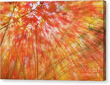 Reaching For The Sky Canvas Print