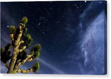 Reaching For The Stars Canvas Print by Angela J Wright