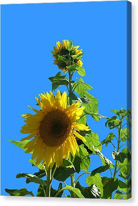 Canvas Print featuring the photograph Reaching To The Sky by Bonnie Muir